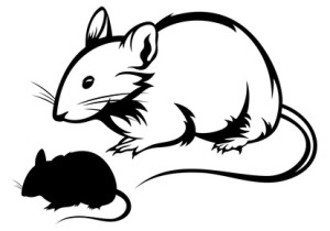mouse silhouette and outline